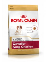 BHN Cavalier King Char Junior-20