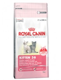 FHN Second Age Kitten 10 kg-20