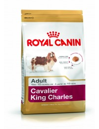 BHNCavalierKingCharles75-20