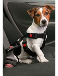 Sikkerhedsseletilhund-20